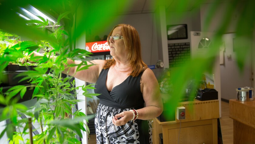 Canna Care pot shop director Lanette Davies will vote against an initiative legalizing recreational use of marijuana.