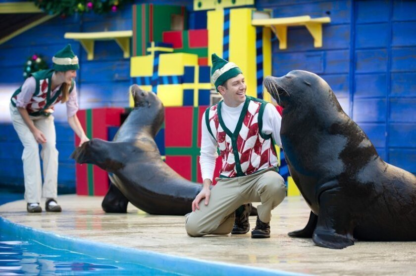 "The comedy-filled, seal-and-sea lion show, ""Clyde & Seamore's Christmas Special,"" is among the half-a-dozen holiday-themed shows performed at SeaWorld San Diego during SeaWorld's Christmas Celebration, which runs Nov. 21, 2015 to Jan. 3, 2016."