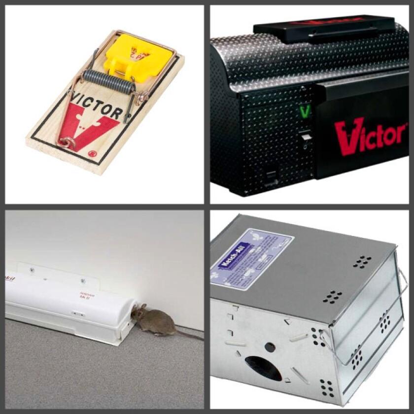 Mousetrap evolution