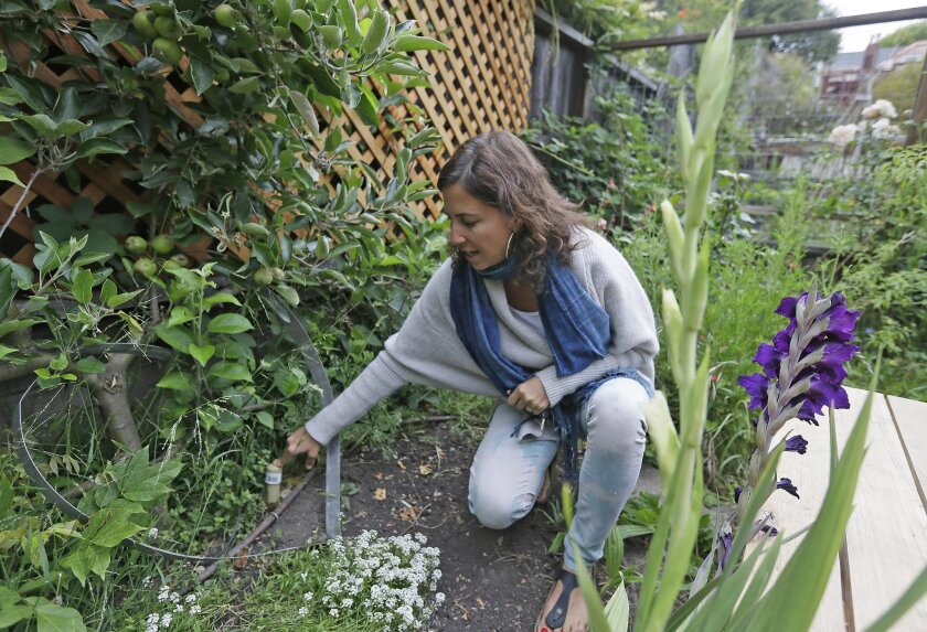 In this photo taken Wednesday, May 27, 2015, Catarina Negrin shows an irrigation system using gray water running through the back yard of her home in Berkeley, Calif. The future of California water looks gray...and that's not a bad thing. As cities cut back on irrigation and other urban water uses,