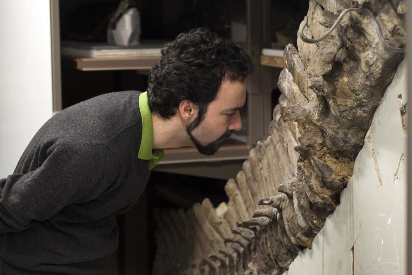 Dinosaur inspection