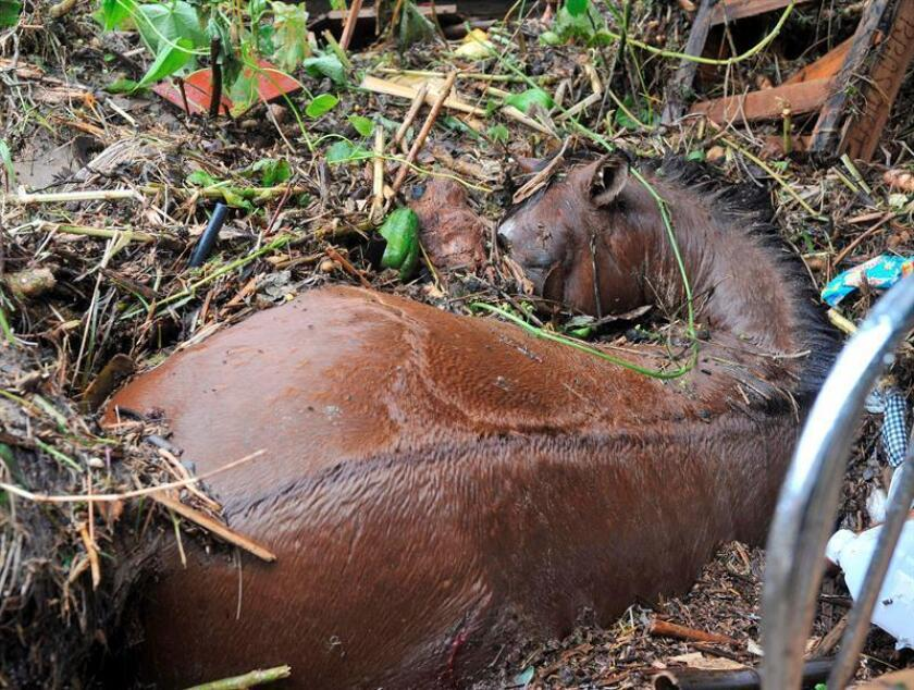 Fotografía que muestra un caballo muerto. EFE/Archivo
