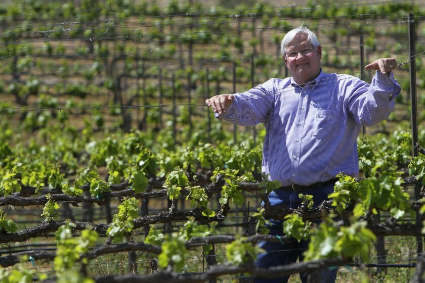 Ben Drake, a longtime winegrape grower, stands in the middle of a vineyard of grenache grapes at Europe Village in Wine Country east of Temecula. Drake says the vineyards have largely recovered from the Pierce's disease that devastated vines in the 1990s.
