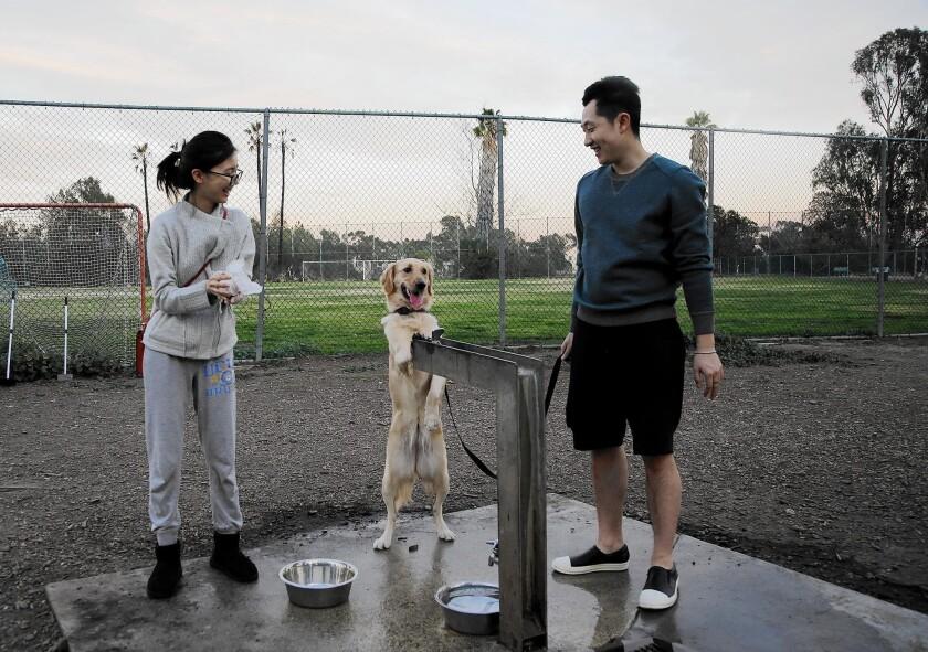 Brentwood dog park