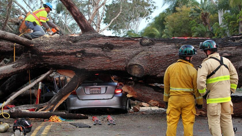 Firefighters worked to move large tree that fell in Pacific Beach on Jan. 31, 2016, and crushed multiple cars including one that was occupied, killing musician Nicki Lyn Carano.