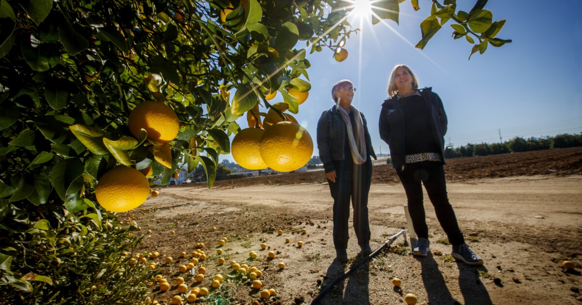 Στην Κιβωτό του Νώε με εσπεριδοειδή, επιστάτες προσπάθησε να εξορκίσει ένα φρούτο αποκάλυψη