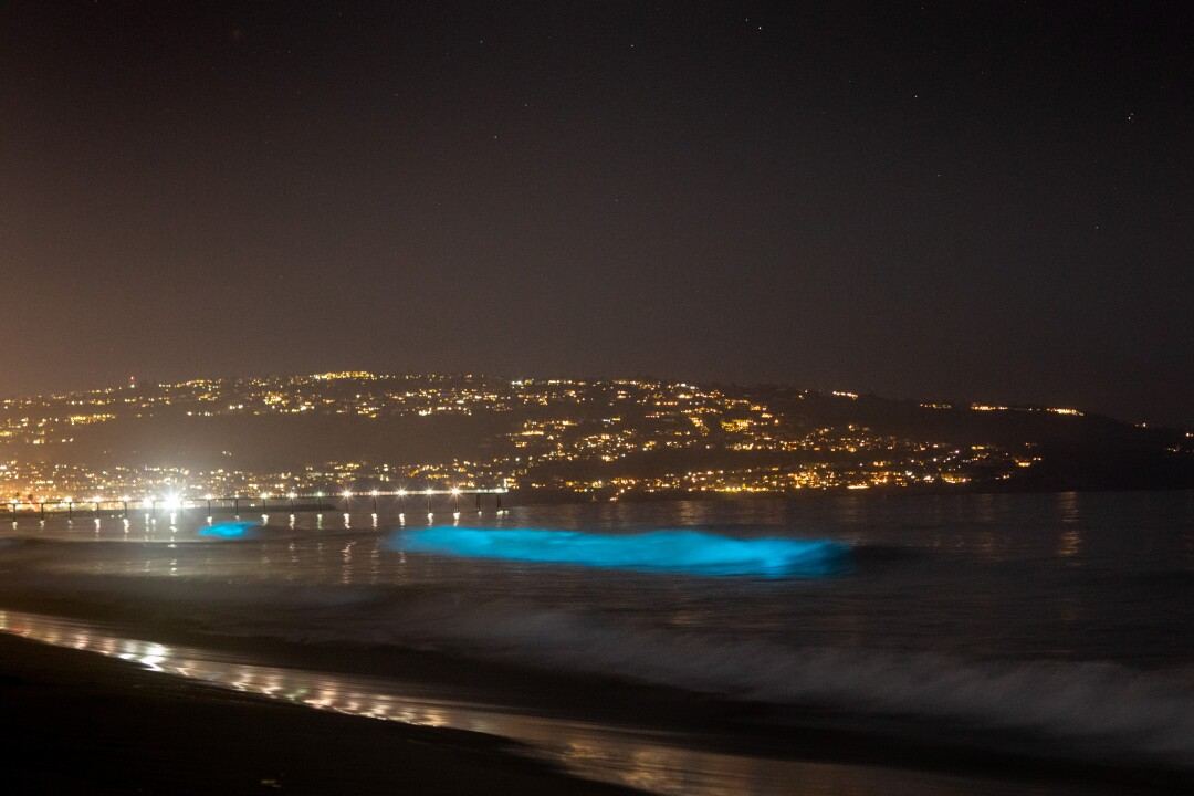 Bioluminescent waves glow off Hermosa Beach.