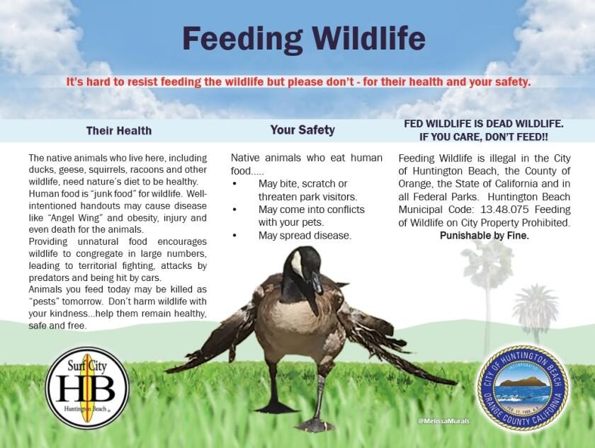 wildlife_feeding.jpg
