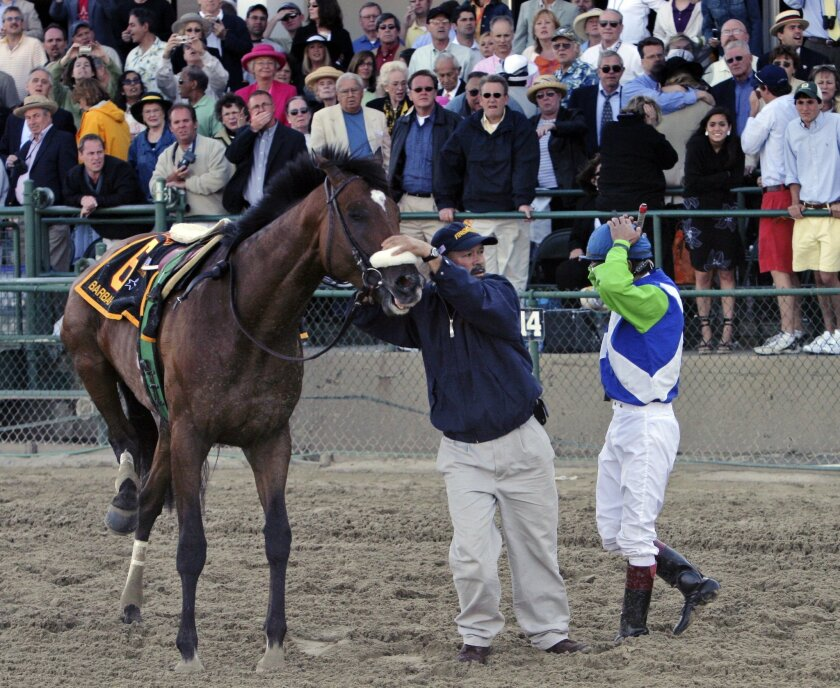 FILE - In this May 20, 2006, file photo, Barbaro is steadied a track worker as jockey Edgar Prado looks on after he pulled up the horse with a fractured right rear leg during the 131st running of the Preakness Stakes horse race at Pimlico Race Course in Baltimore. Barbaro, who won the Kentucky Derby in 2006, broke down in the Preakness and was euthanized with laminitis several months later after a gallant effort to save him. (AP Photo/Garry Jones, File)