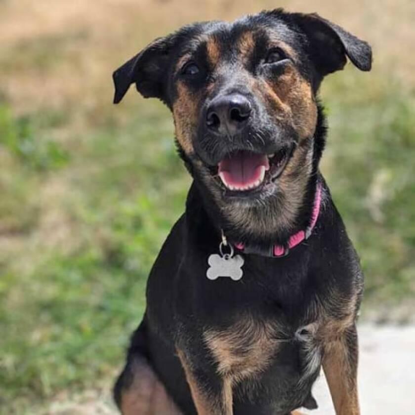 Pet of the week is a shepherd-hound named Matilde.