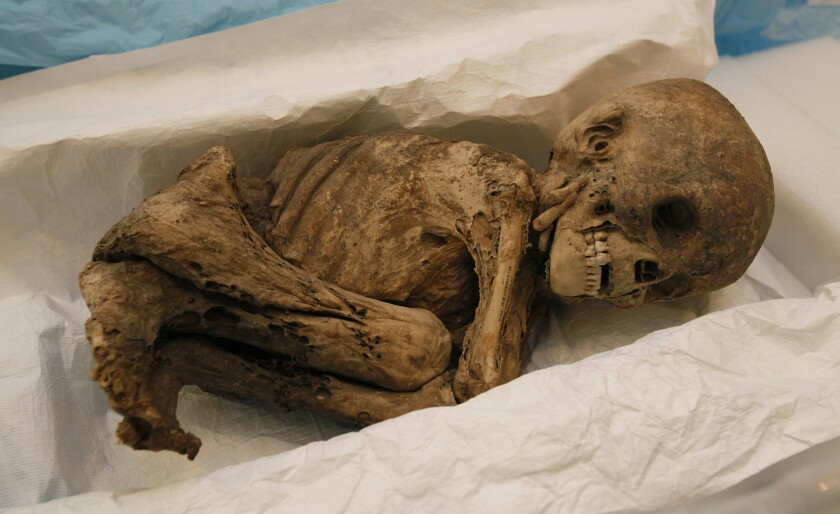 One of the four 500 year old Peruvian mummies from the The San Diego Museum that will get a CT scan.
