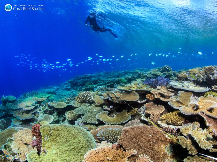 A rare healthy reef in the central Great Barrier Reef in October 2016.