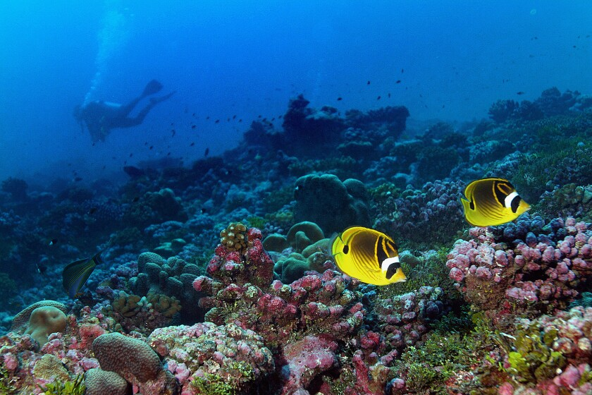 Coral reefs are among the marine habitats vulnerable to drastic shifts as a consequnce of climate change by 2100, according to a new study.