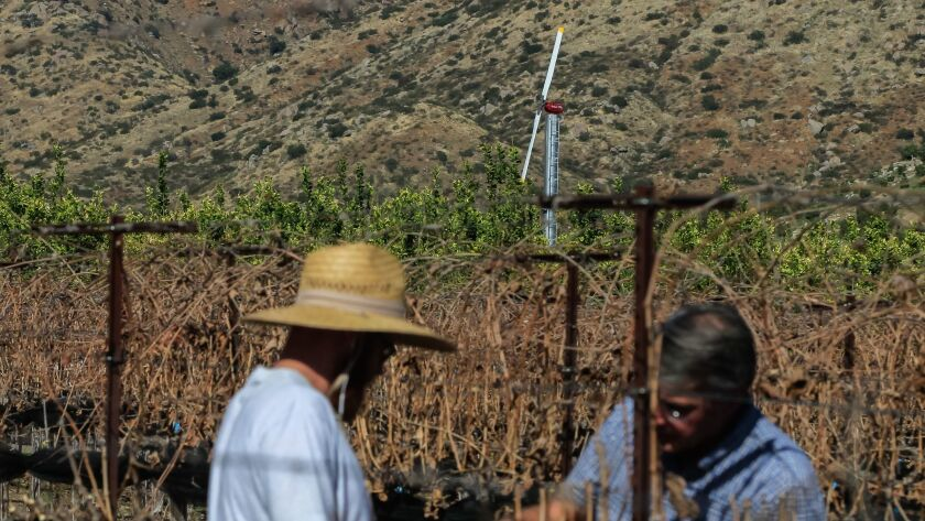 With giant fans in the background (placed in the lemon groves), Cellar manager Travis Roe (left) and ranch manager Al Stehly look over a Syrah vine at Rockwood Ranch on Tuesday in the San Pasqual Valley area of San Diego,