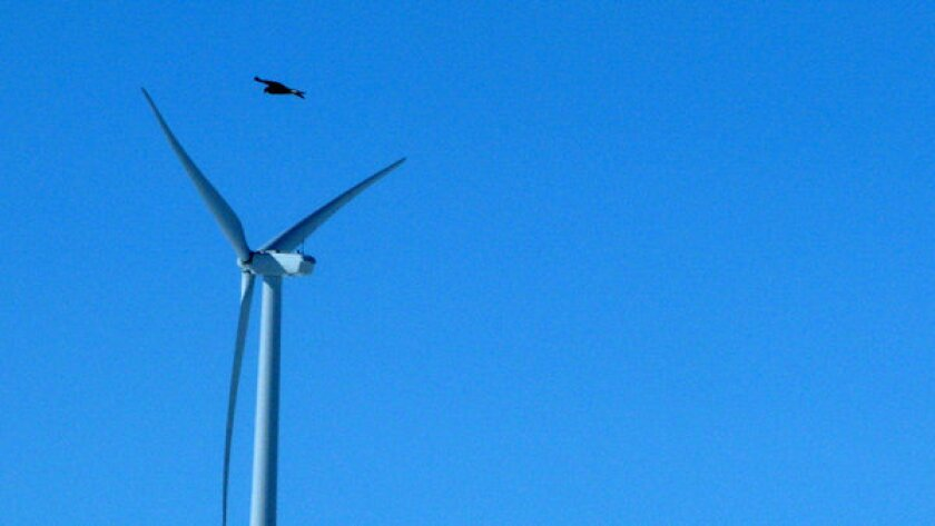 A golden eagle flies over a wind turbine on Duke Energy's wind farm in Converse County, Wyo. Duke Energy will pay $1 million for killing 14 golden eagles over the past three years at two Wyoming wind farms.