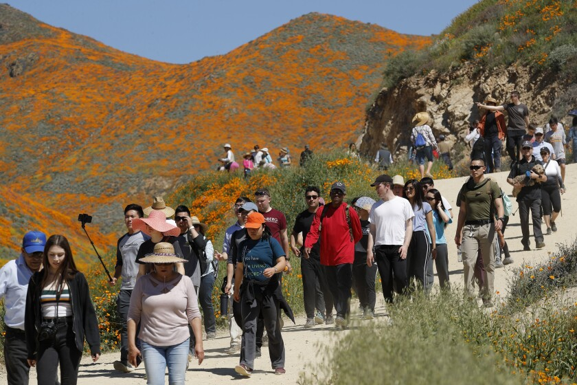 "FILE - In this March 18, 2019 file photo people walk among wildflowers in bloom in Lake Elsinore, Calif. Southern California's dry winter isn't good for wildflowers and that's OK with officials in the city of Lake Elsinore where last spring's ""superbloom"" of poppies drew huge crowds. (AP Photo/Gregory Bull,File)"