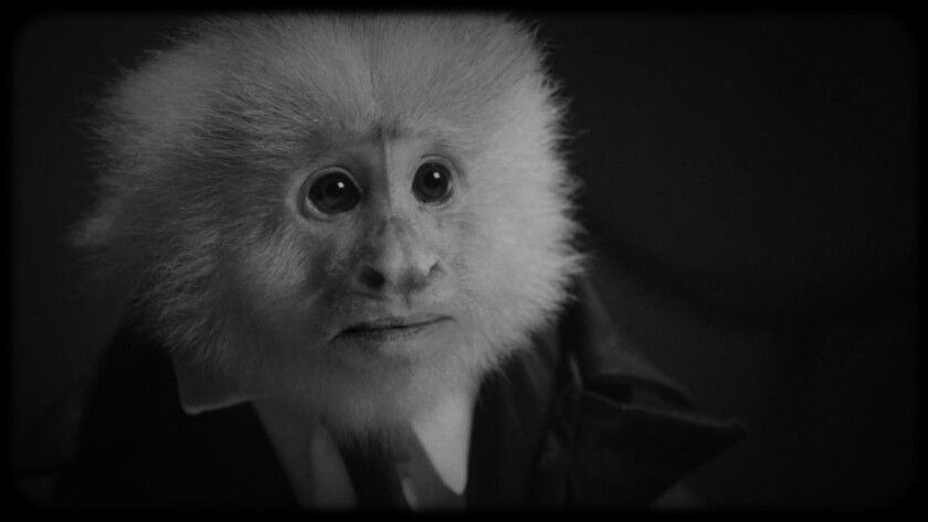 "The primate who performs as superstar crooner Jack Cruz, as seen in David Lynch's short Netflix film, ""What Did Jack Do?"""