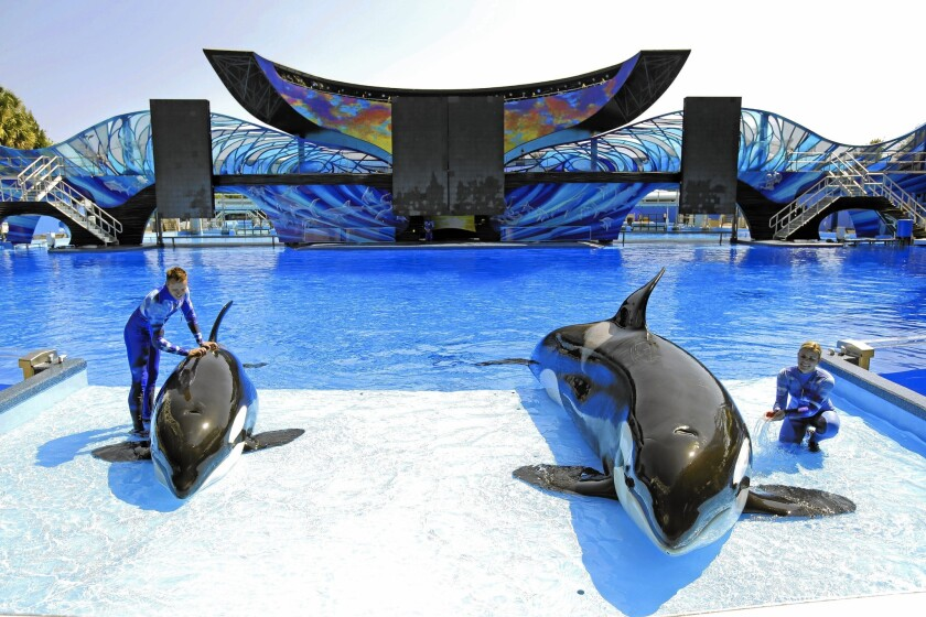 SeaWorld trainer Ryan Faulkner, left, with killer whale Melia, and Michelle Shoemaker, right, with Kayla work on a routine for a show at the Orlando, Fla., theme park in 2014.