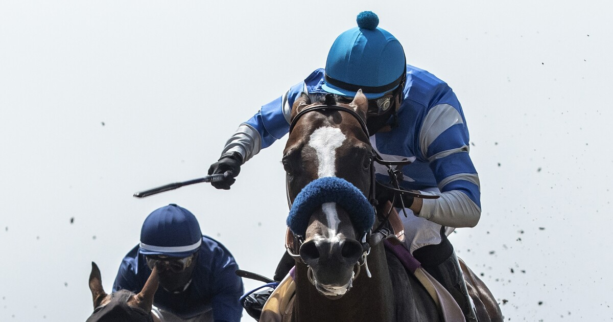 Horse racing newsletter: Thousand Words now in Derby picture