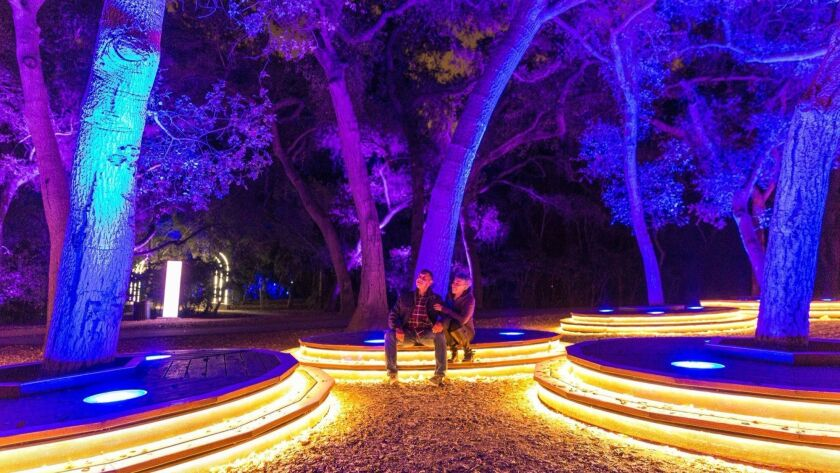 Take in the Symphony of Oaks at Descanso Gardens' Enchanted: Forest of Light. (Cal Bingham)