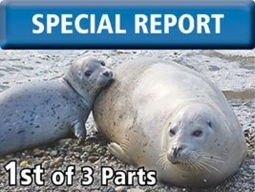 Seal-Deal-Special-Report-Part1-Web
