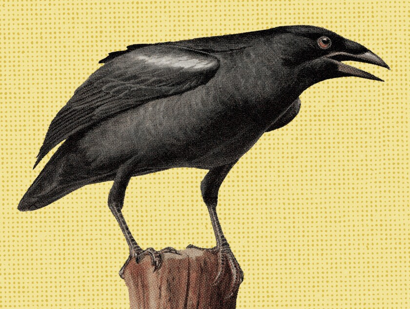 Crow photo illustration