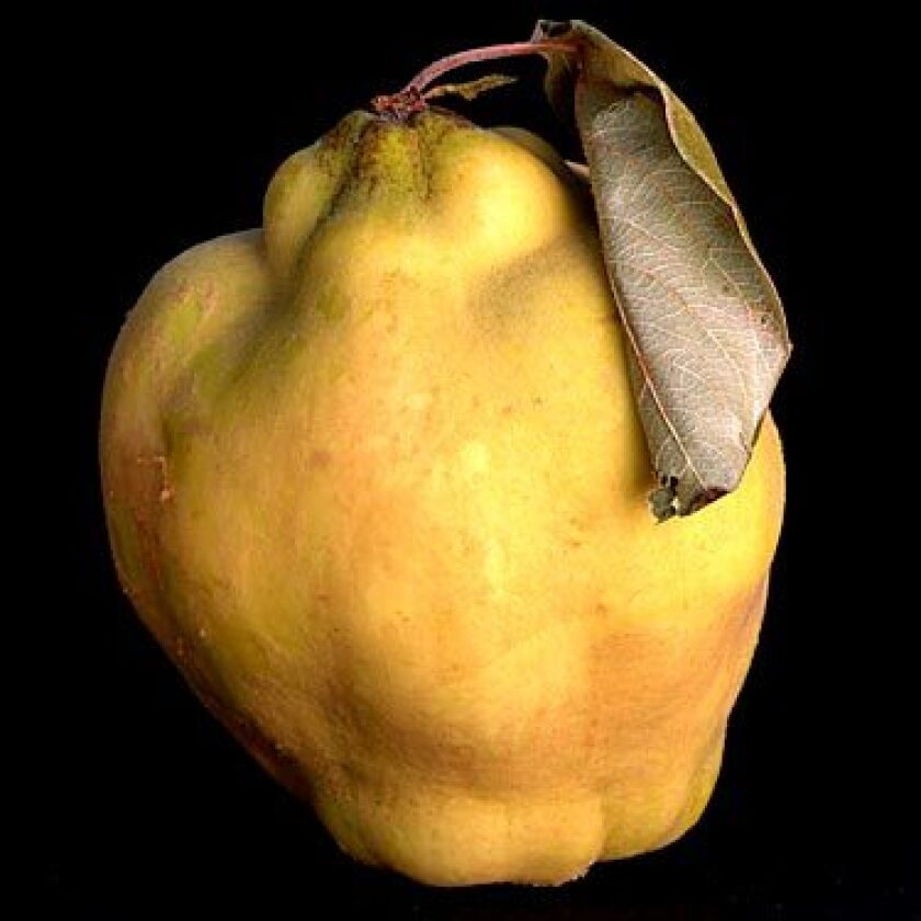 Interest in the once-popular quince is growing again.