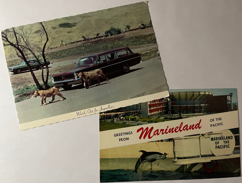 """The Lion Country Safari postcard says: """"Watch out for jaywalkers."""" The Marineland card shows the park's facade and a dolphin."""