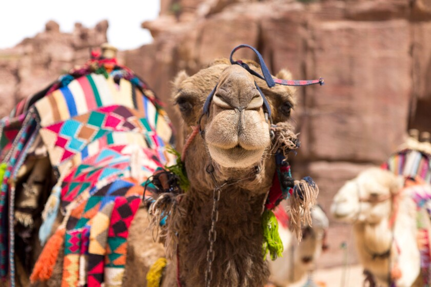 Taken in Petra, Jordan