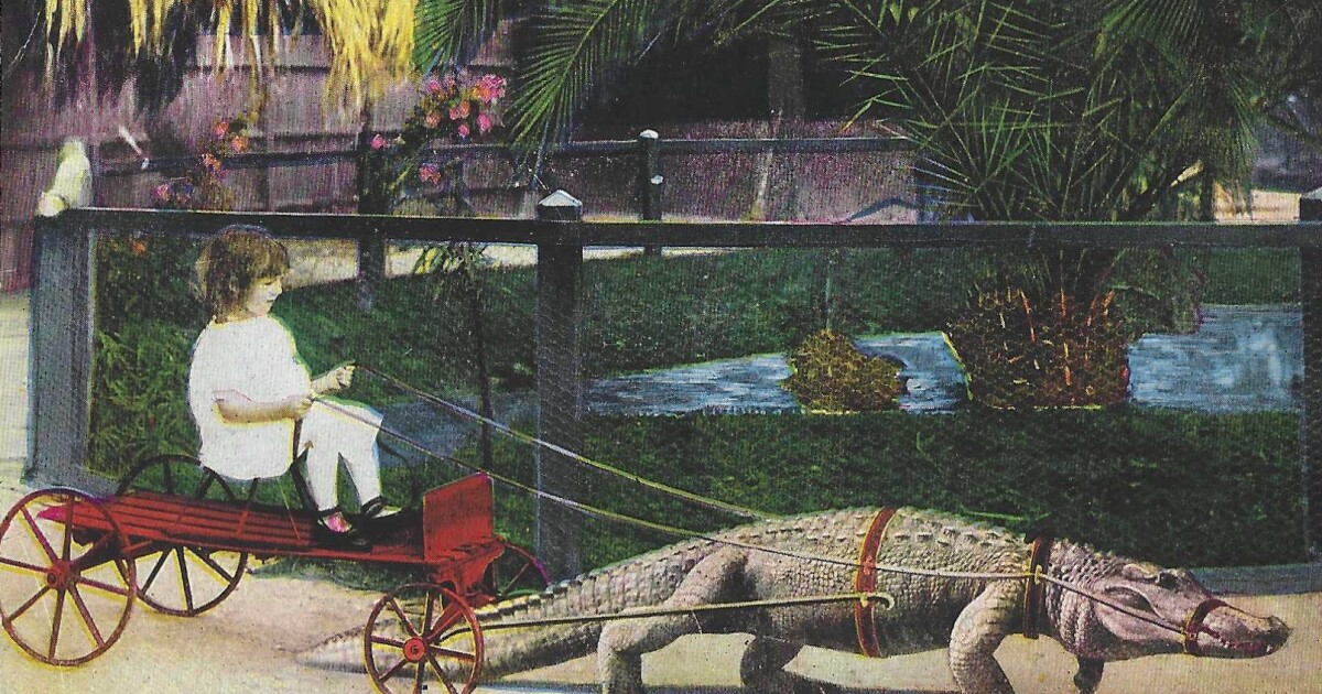 Why was there an alligator farm at Lincoln Park? It was one of many odd amusements of L.A.'s past