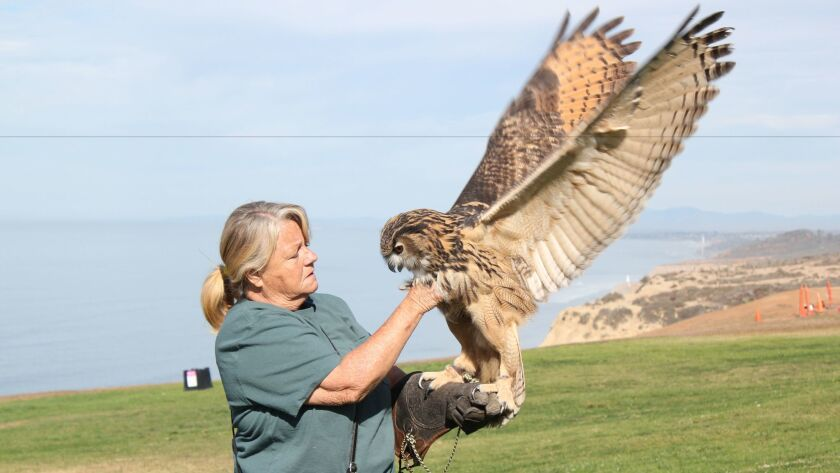 Terry Lockwood holds Henton (Eurasian Eagle Owl, 2 years old, 6 pounds). His life expectancy in captivity is 60 years.