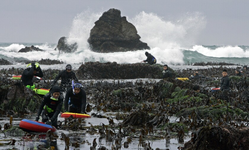 In this photo from 2007, abalone divers brave Pacific Ocean surf as they hunt for the shellfish at l