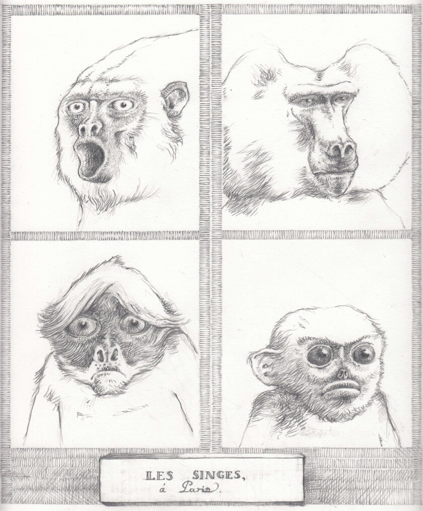 "An illustration of monkeys from the novel ""Little."" Credit: Illustrations ? Edward Carey / Riverhead"