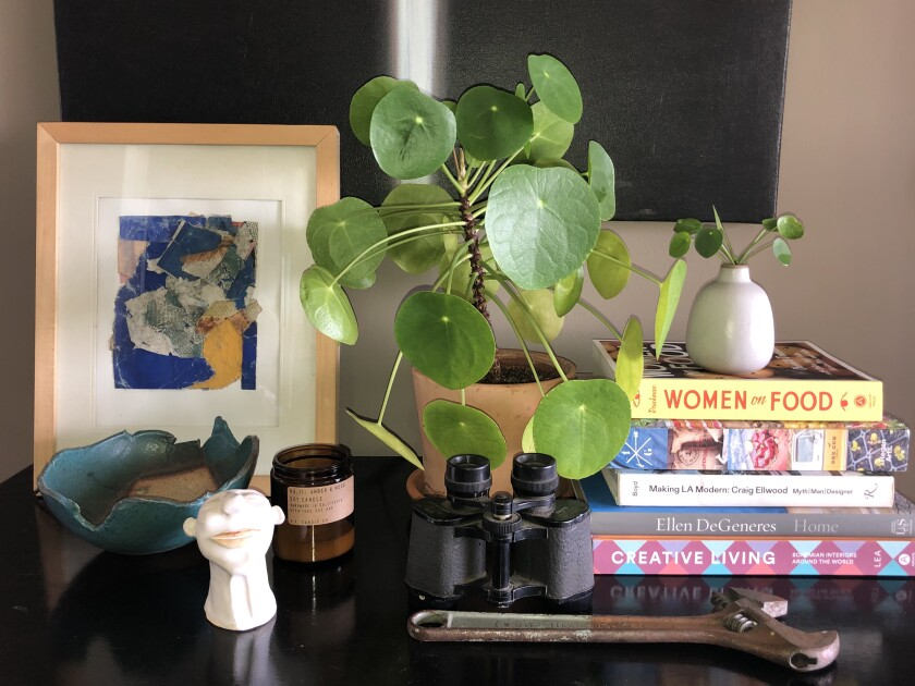 Chinese money plant, or Pilea peperomioides