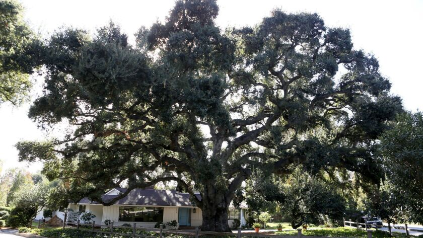 The home at 650 Georgian Rd, has two large old oak trees, one in the front yard and on in the backya