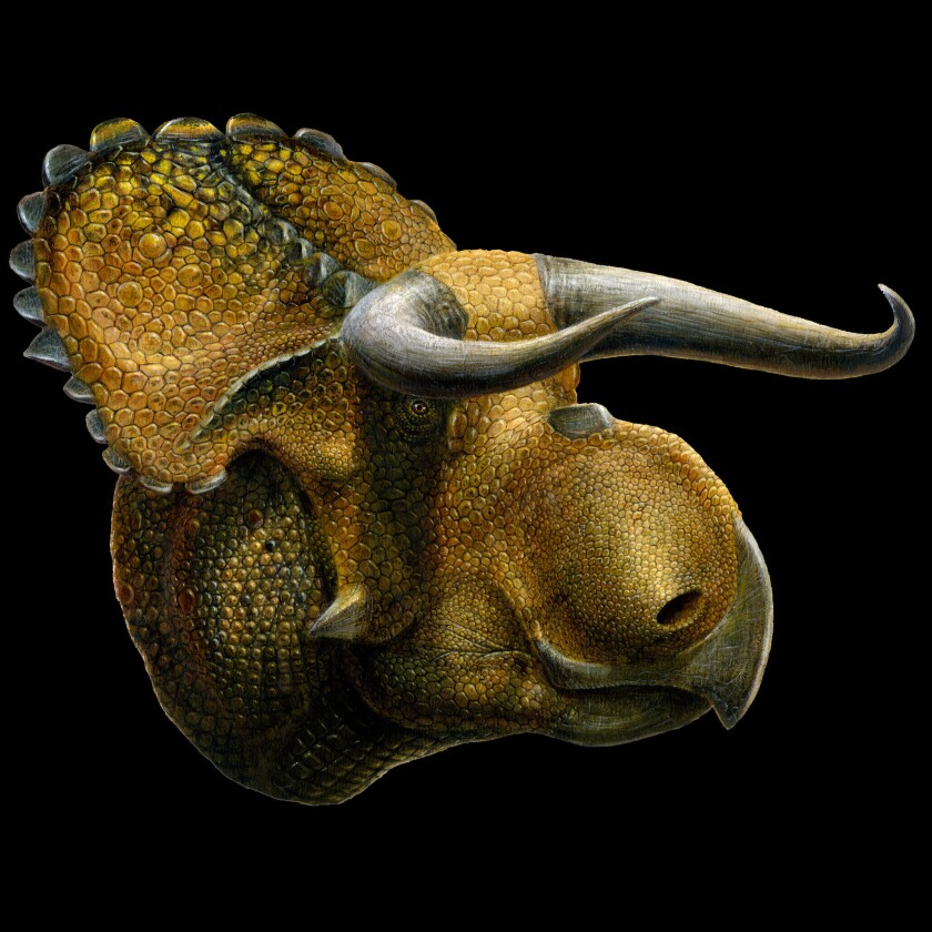 Huge nose on new dinosaur species may not have helped it smell