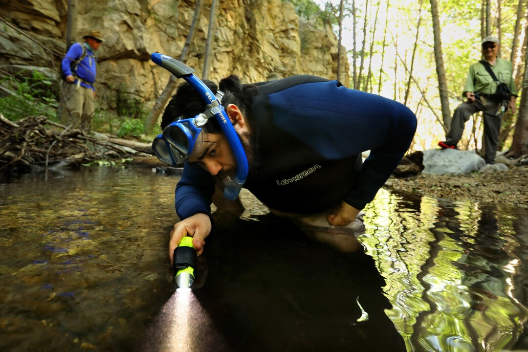 Angel Pinedo looks for rainbow trout and other fish in the Arroyo Seco.