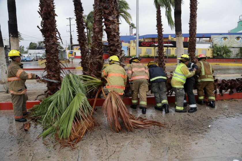 Firemen removed a palm tree felled by Hurricane Newton in Cabo San Lucas, Mexico, Tuesday, Sept. 6, 2016. Newton slammed into the twin resorts of Los Cabos on the southern tip of Mexico's Baja California peninsula Tuesday morning, knocking out power in some places as stranded tourists huddled in th