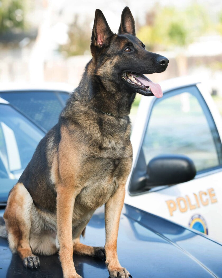 A Long Beach police K-9 named Ozzy died after being left in a hot vehicle.
