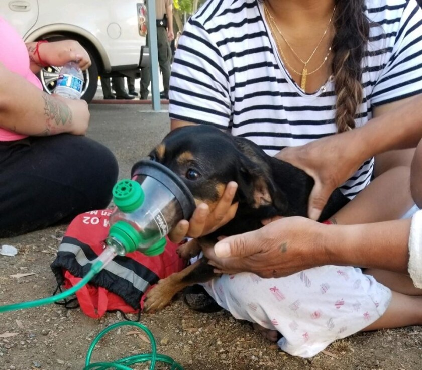 While fighting an apartment fire in Spring Valley on Sunday, San Miguel Consolidated Fire District firefighter Cameron Smith found a puppy suffering from smoke inhalation and not moving under a bed. Smith pulled him out, then firefighters used a donated pet oxygen mask to save his life. San Miguel board members are set to approve the district's $22 million budget this week.