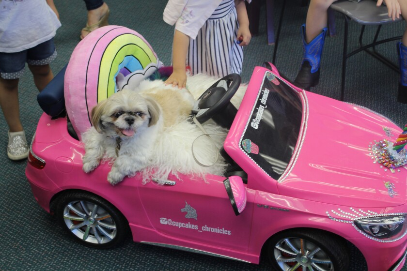 Cupcake visited the Rancho Santa Fe Library last week.