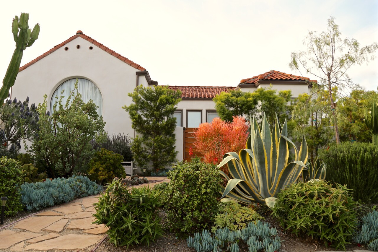 Once a lawn, this front yard is now filled with California natives, cuttings from a friend's drought-tolerant garden and a California pepper tree and pink trumpet tree, which were free, courtesy of the City Plants Parkway Tree Program.