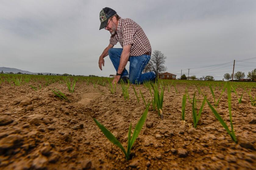 Drought farming