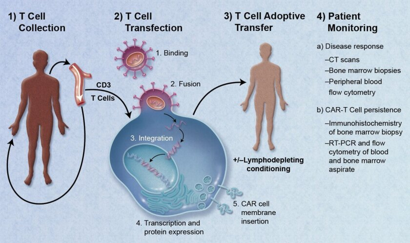 Flow chart of one method of engineering T cells to fight cancer.