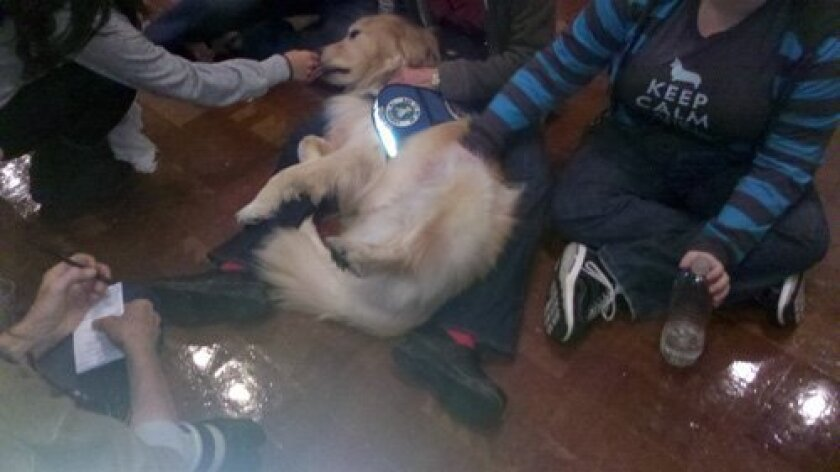 Lizzy, a golden retriever, was more than happy to oblige students who needed a little relief from finals.
