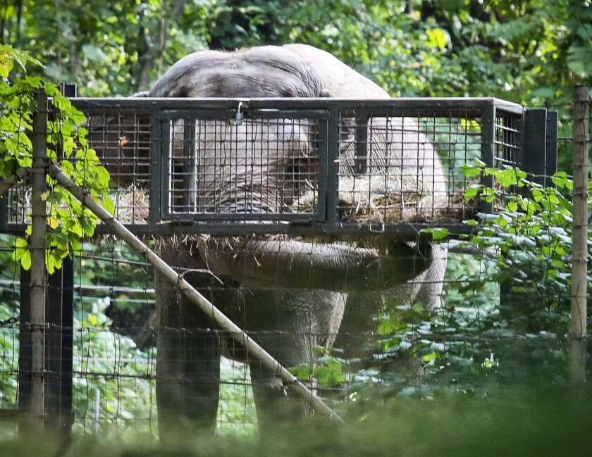 Bronx Zoo Elephant Lawsuit