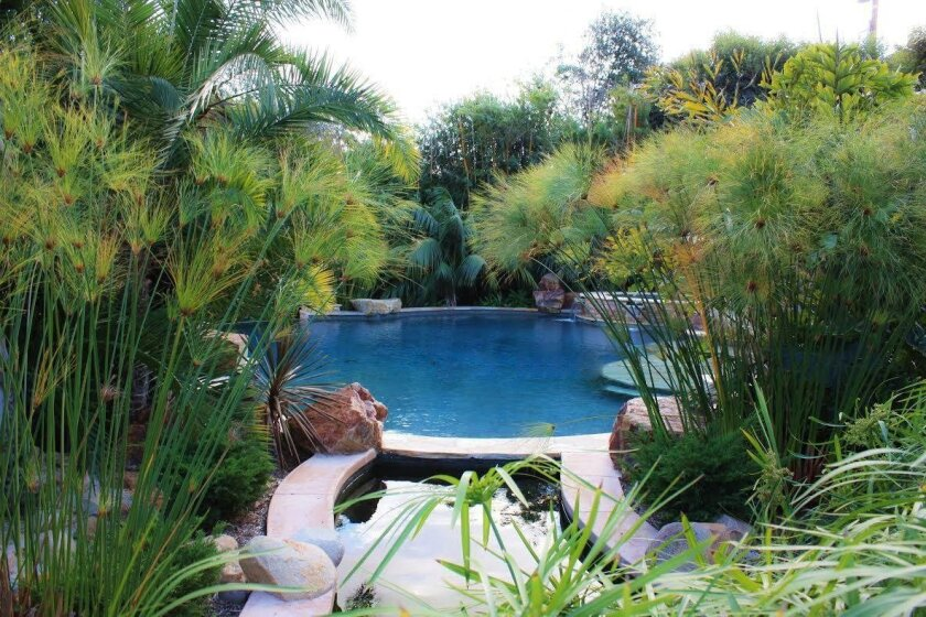 Lush planting surround this pool in a Carmel Valley garden showcasing a collection of palms and cycads. It is a stop on the San Diego Horticultural Society's tour, From the Valley to the Sea. Barbara Raub photo
