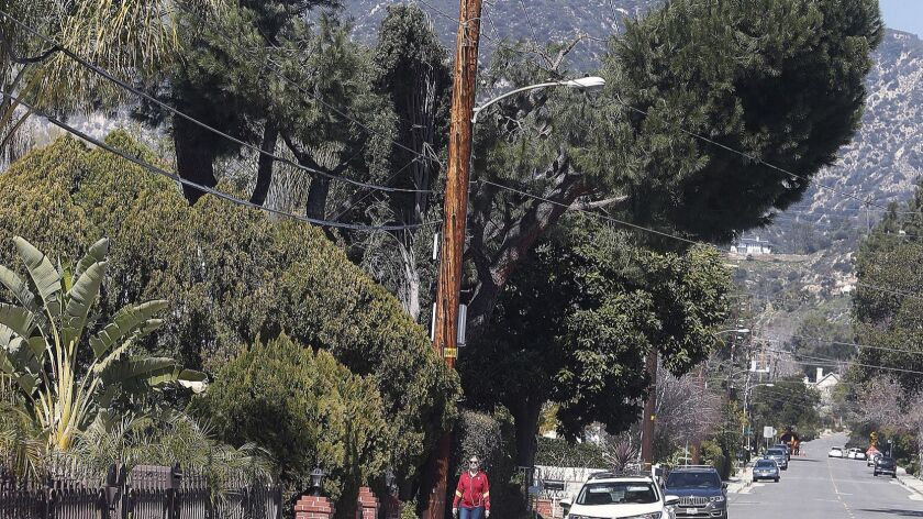 A tree was carved out to create a 12-foot clearance for power lines on Oakwood Avenue in La Cañada Flintridge on Monday. The trees are being trimmed by Southern California Edison crews to protect power lines, but an arborist says the extreme trimming could be harmful.