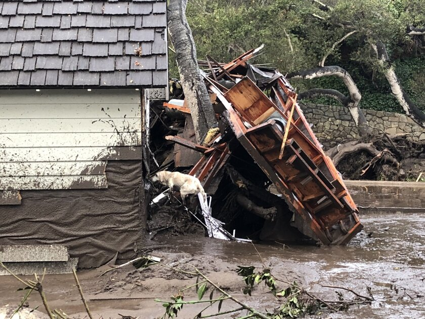 A Santa Barbara County Fire Department search dog looks for victims in a heavily damaged home in Montecito after a deadly mudslide.