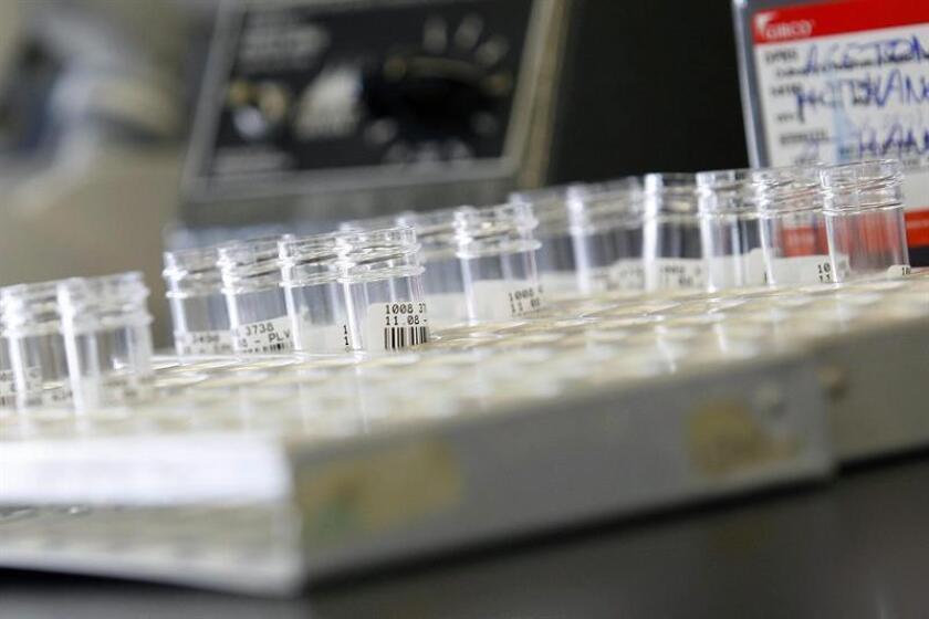 Vista de unos tubos de ensayo en un laboratorio. EFE/Archivo